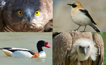 Big day birdwatching Malaga, Andalucia