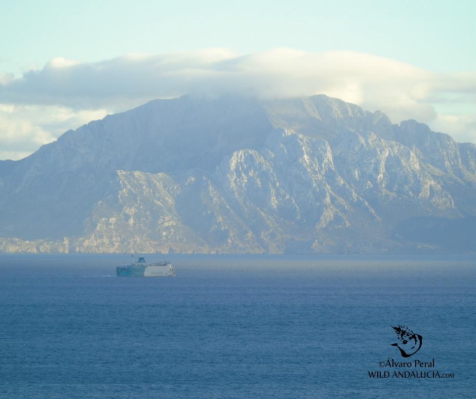 Bird migration in the strait of Gibraltar Spain
