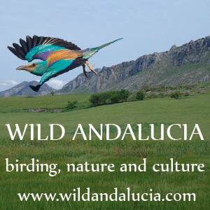 Guided birding in Andalucia