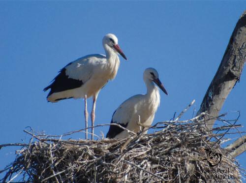 Storks in La Mancha Spain