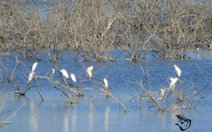 egrets and waterfowl in spain