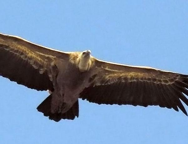 birding in Ronda, Spain