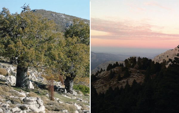 Birding and the trees of the sierra de las nieves