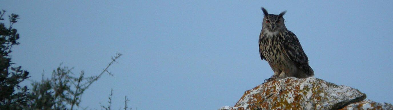 Birding tours in Spain