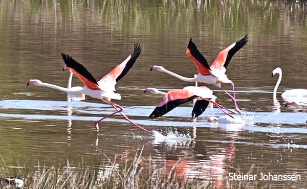 where to see flamingo in spain