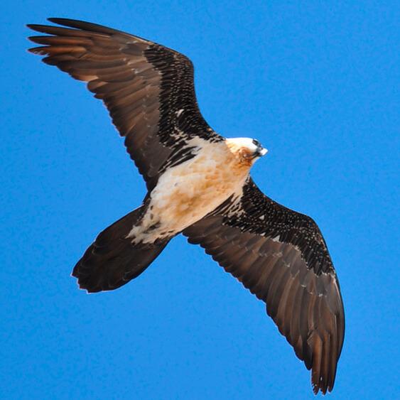 Costa del Sol Birding Tour