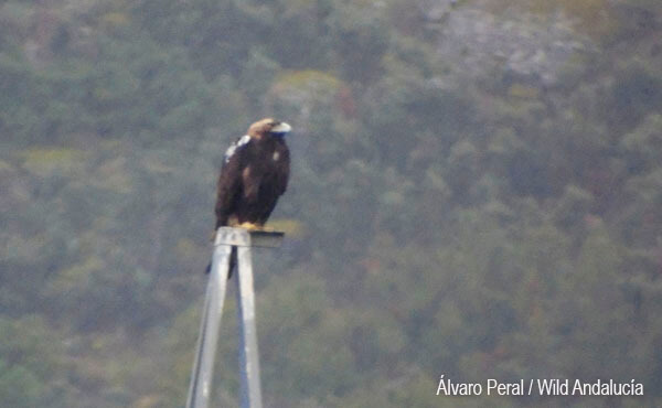 spanish eagle watching in spain