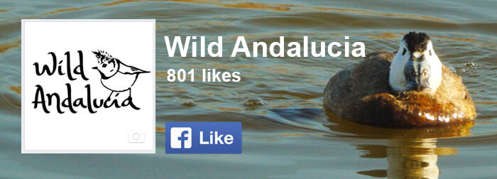 wild andalucia facebook channel