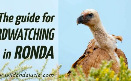 birdwatching in Ronda