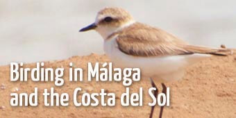 Bird watching in Malaga and spanish south coast