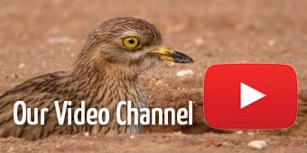 Spanish birds id video