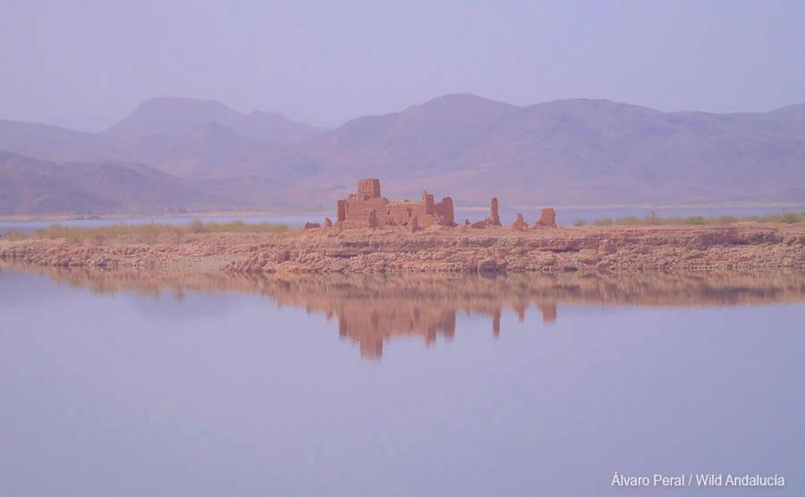 Birding at El Mansour reservoir