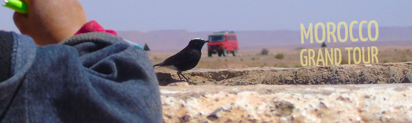 birding tour over Morocco