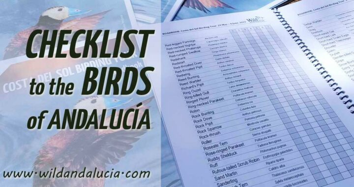 Bird list south Spain