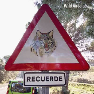 iberian lynx sign
