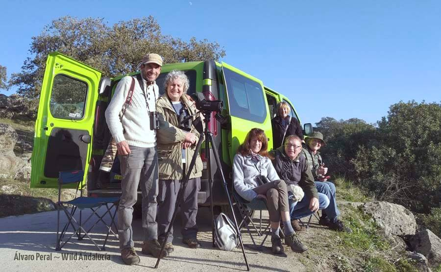 Lynx watching guide in Spain