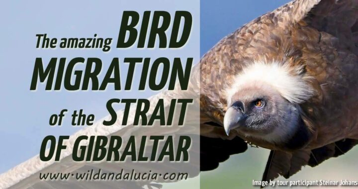Bird migration in the Strait of Gibraltar
