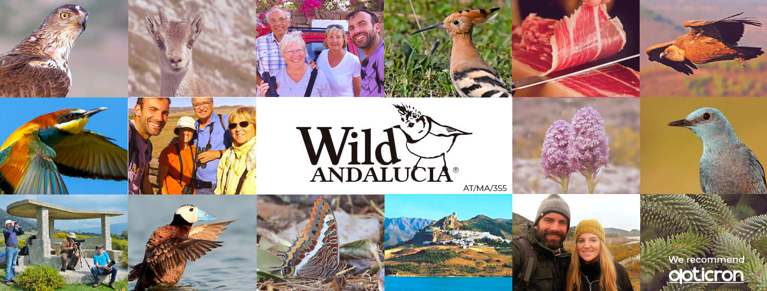 bird watching company in Spain
