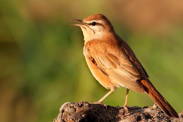 Big day of birding in Spain