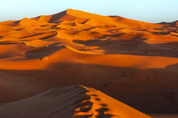 Widlife and bird watching tour in Morocco