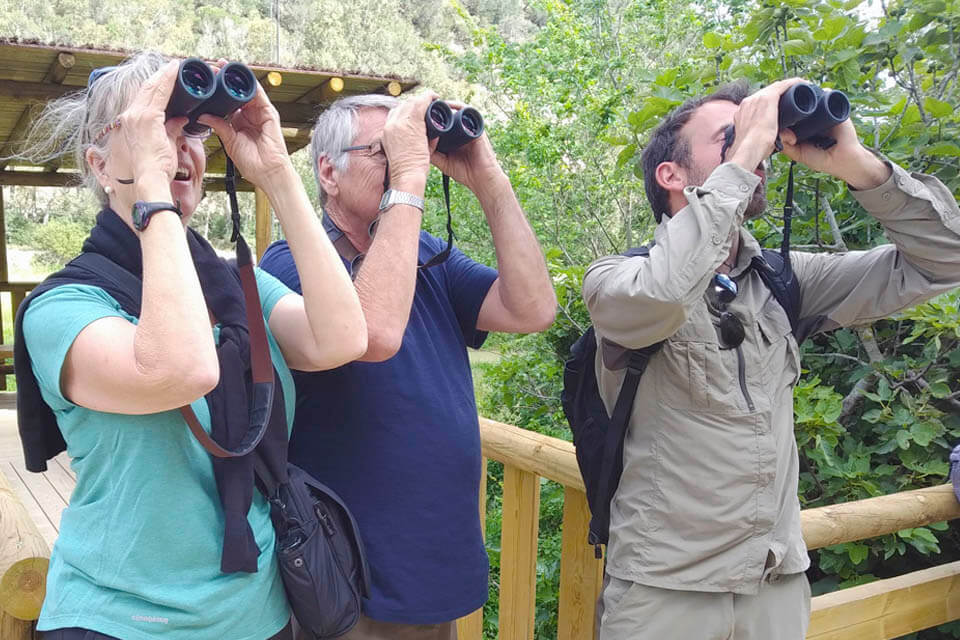 tailor-made spanish birdwatch