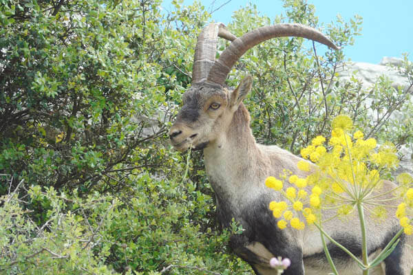 Wildlife at El Torcal