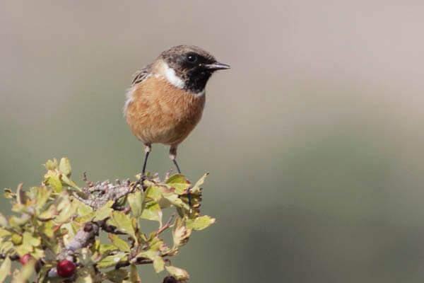 Wildlife photography Hide near Costa del Sol