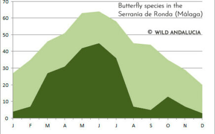 butterfly presence in Ronda